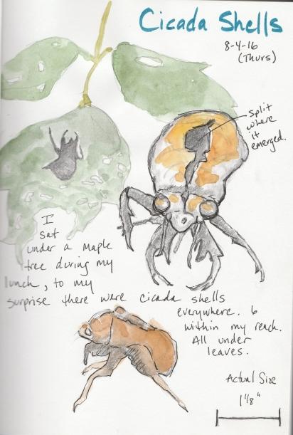 20160804_cicada_shell